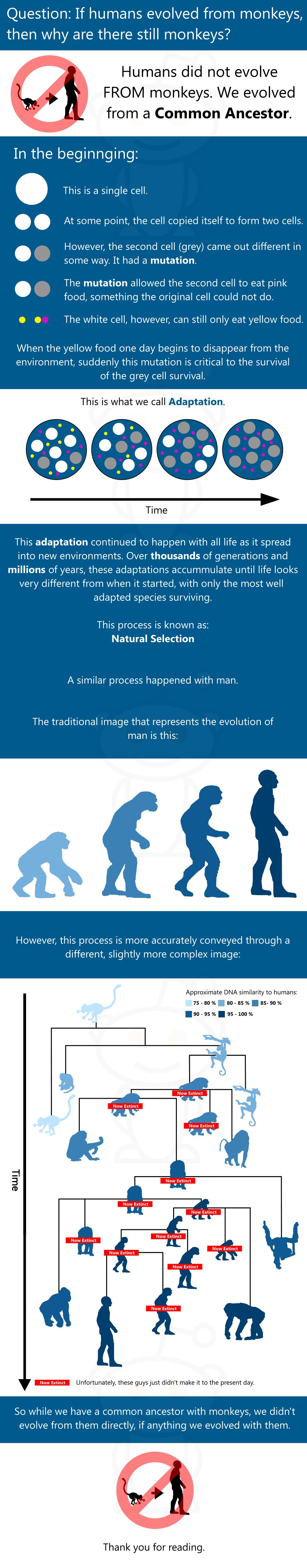 Evolution Explained