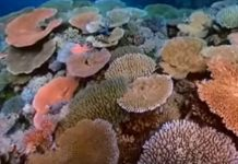 10-solutions-to-coral-reef-destruction